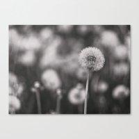 field of dandies Canvas Print