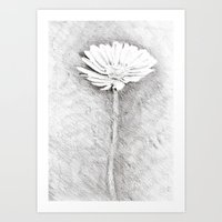Daisy drawing Art Print