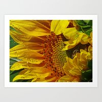 Inside the Sunflower Art Print
