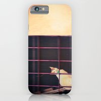 Kitty looking at me iPhone 6 Slim Case