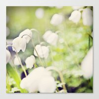 Spring Miracles Canvas Print
