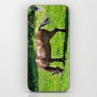 A Grazing Horse iPhone & iPod Skin