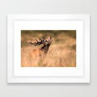 Red Deer Stag Framed Art Print