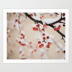 Winterberry Art Print