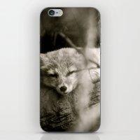 Nature's Finest Peace iPhone & iPod Skin