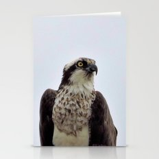 Osprey Stationery Cards