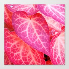 pink leaf I Canvas Print