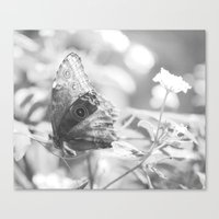 Black And White Butterfl… Canvas Print