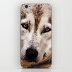 Husky 2 iPhone & iPod Skin