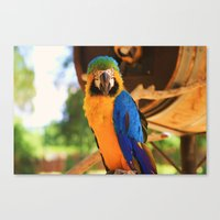 ~Bird Beauty~ Canvas Print