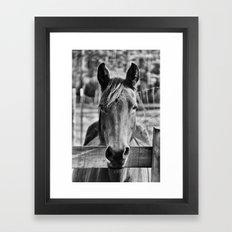 Waiting (Black and White Horse #1)  Framed Art Print