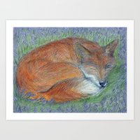 A Sleepy Fox  Art Print