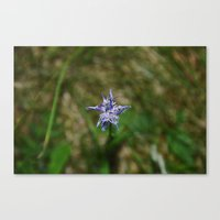 Mountain Flower Canvas Print