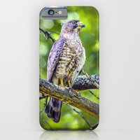 Broad wing Hawk iPhone 6 Slim Case