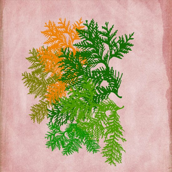 Fall Fern Art Print