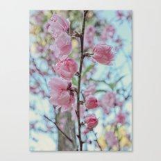 Soft Pink Cherry Blossom Flowers Canvas Print