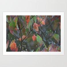Fall in PA Art Print