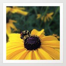 Lone Bee Art Print