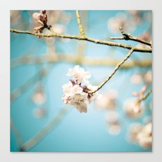 Cherry Blossom, Pink Flowers and Blue Sky. Canvas Print