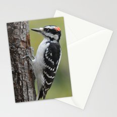 Male Hairy Woodpecker Stationery Cards