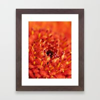 Orange Gerbera Framed Art Print