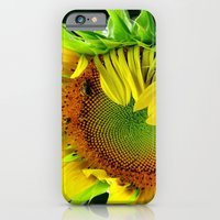 iPhone & iPod Case featuring Sunflower Morning by Jean Dougherty