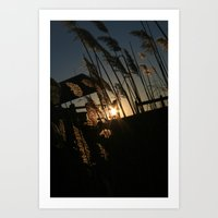 Sunset In The Fall Art Print