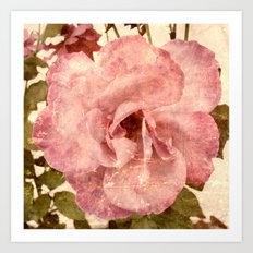 Pink Vintage Rose (Jul16) Art Print