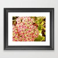Art Of Nature Framed Art Print