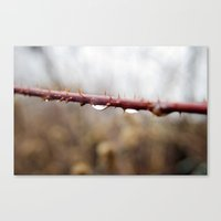 Thorns and Water Canvas Print