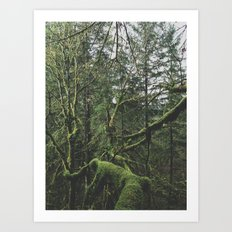 Moss Covered Trees Art Print