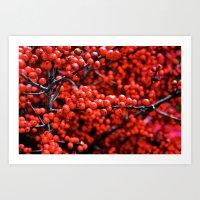 Festive Berries 1 Art Print