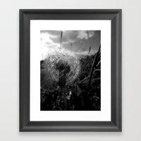 Soft Dandy Framed Art Print
