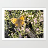 Butterfly Beauty Art Print