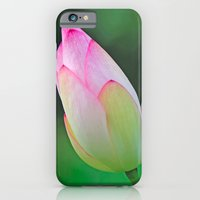 Pink Water Lily iPhone 6 Slim Case