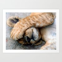 The Lion Sleeps Art Print