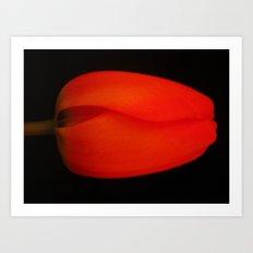 tulip Art Print