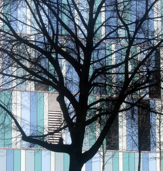 tree (Munich) Art Print