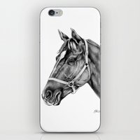 Affirmed (US) Thoroughbred Stallion iPhone & iPod Skin