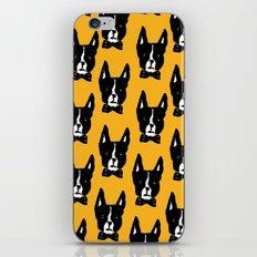 Boston Terriers iPhone & iPod Skin