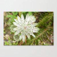 woodland flower Canvas Print