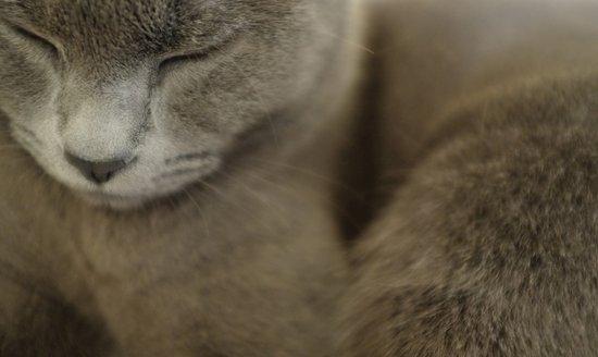 Cat Grey Art Print