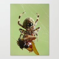 Spider With Lunch Canvas Print