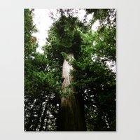 Redwoods #3 Canvas Print