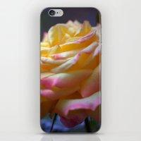 Beautiful Rose 1424 iPhone & iPod Skin