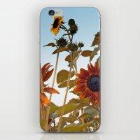 Red Sunflower... iPhone & iPod Skin