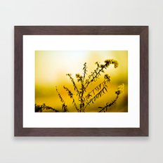 Lemon Yellow Sun Flower Framed Art Print
