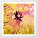 Colours WaterLily Art Print