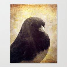 Dark-eyed Junco Canvas Print