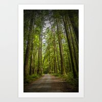 Rain Forest Dirt Road on Vancouver Island in British Columbia Canada No.1179 A Fine Art Wilderness L Art Print